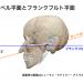 顎の引きすぎはストレートネックの原因に?! カンペル平面とフランクフルト平面で考える